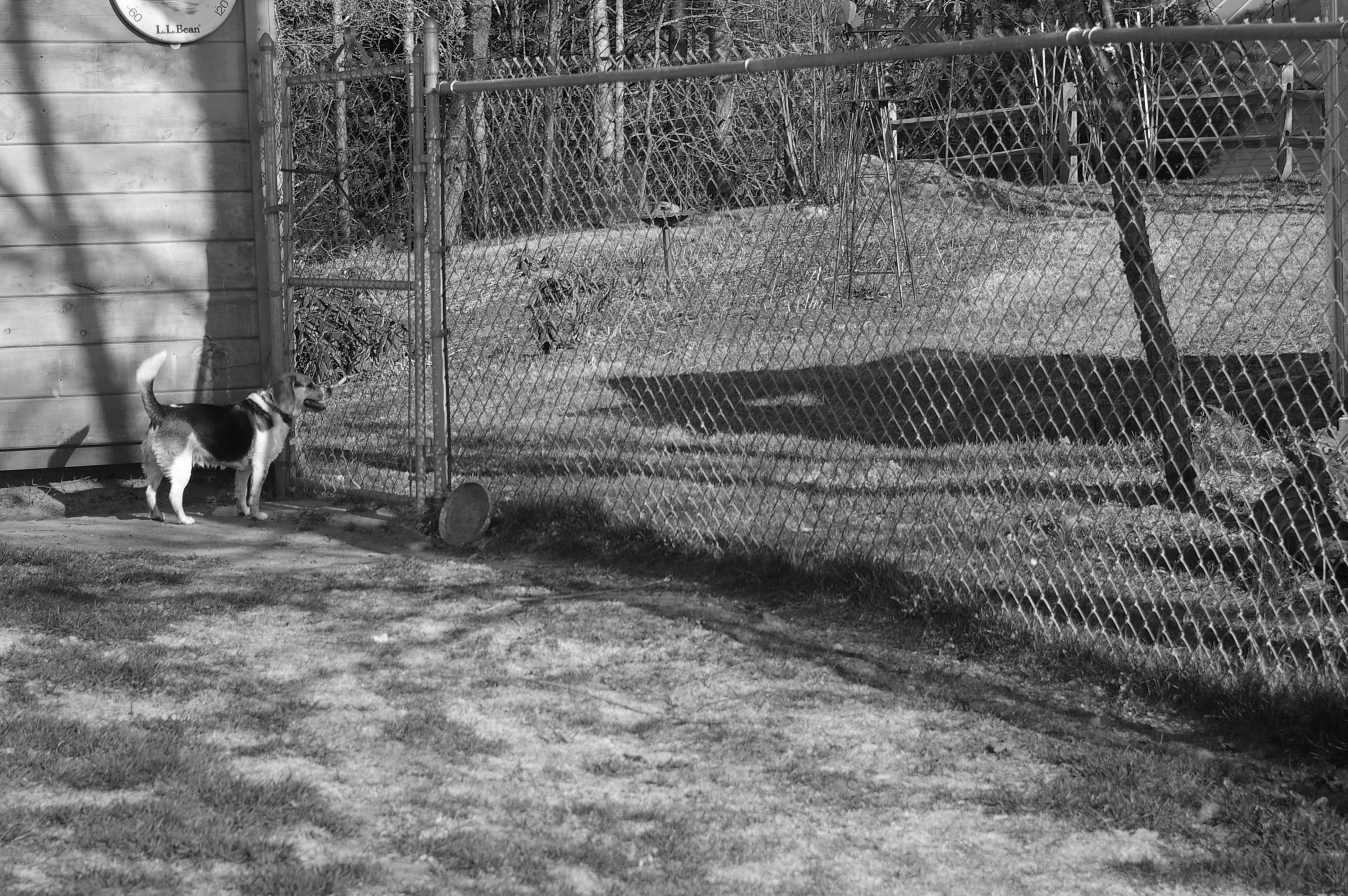 Black White fence