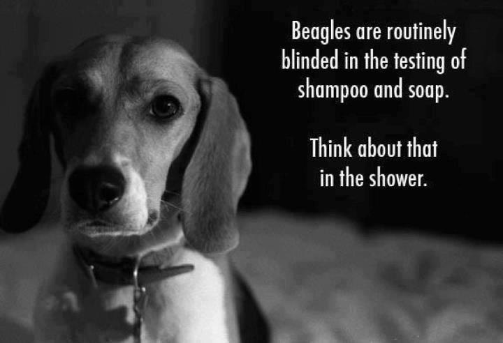 beagle blog