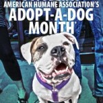 October is Adopt-a-Dog Month!
