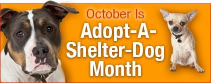 adopt-dog-month