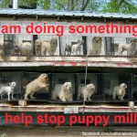 Let's Put an End to Puppy Mills: Part 1/Introduction