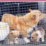 Let's Put an End to Puppy Mills: Part 6/Enforcement of Animal Welfare Act