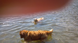 Moses & Sheba at the lake