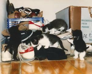 BW Kitties