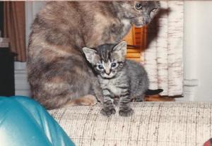 Concha & kitten