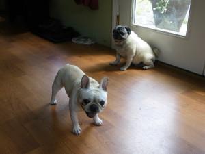 Margo & Fiona