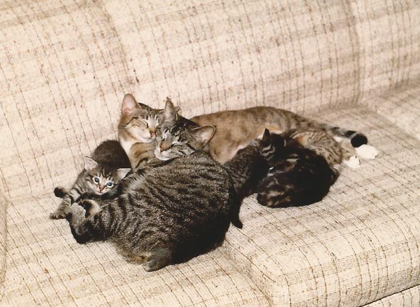Grandma Ragu with Bones and the kittens