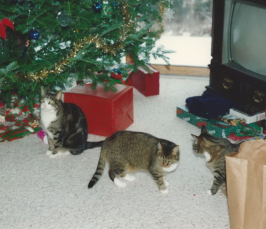 Don Juan, Tasha, and Bones.   Christmas 1993.