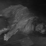 Black & White Sunday – Aftermath