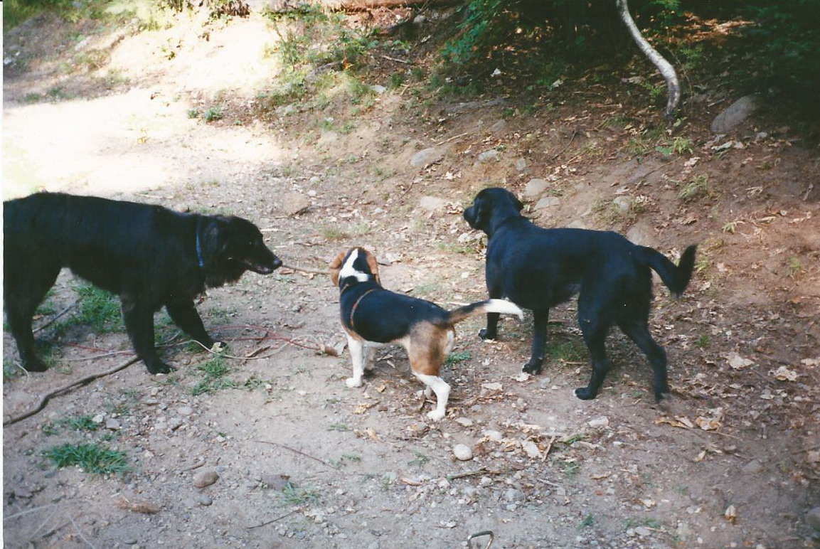 Maggie with both of her brothers, playing at camp.