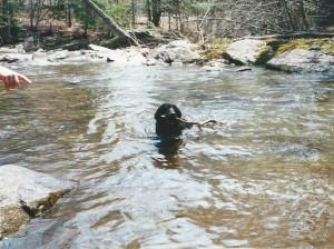 swim stick