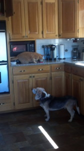 He likes to watch his cat eat!