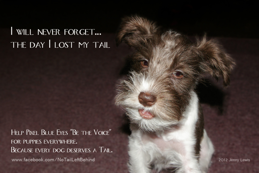 Every Dog Deserves a Tail Poster 2