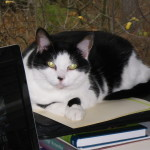 My Life of Pets in Photos XI – Black & White Kitties