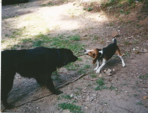Kobi playing at camp with his cousin Bear.