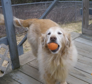 I'll show you the ball....I just won't give it to you!