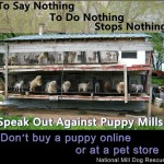 Please Know Where Your Puppies Come From – Puppy Mills are Everywhere