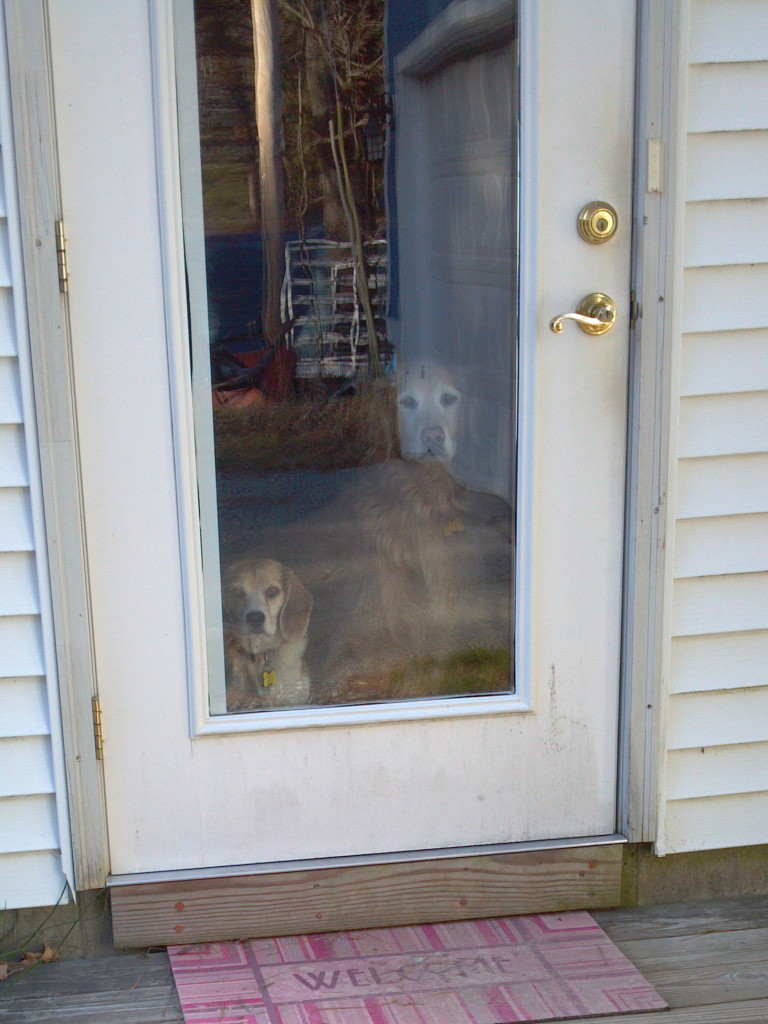 Customers to the yard sale could see they were being watched!