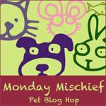Monday Mischief – Canines & Felines