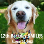 Happy Barkday to Sugar of Golden Woofs