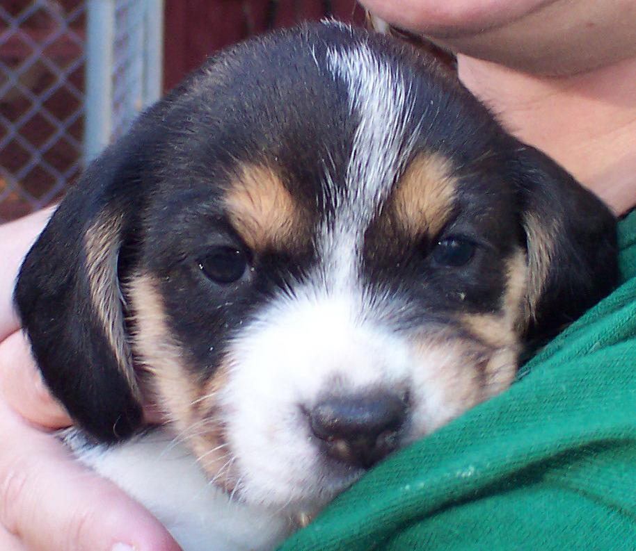 Puppy  Crick