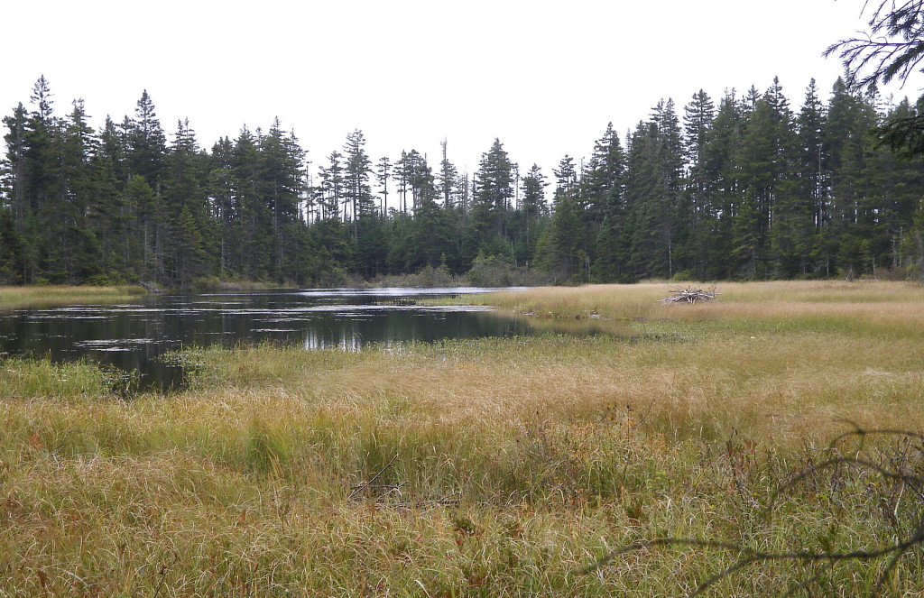 Beaver hut on far right of pond.