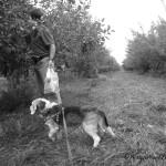 B&W Sunday – Kobi Goes Apple Picking