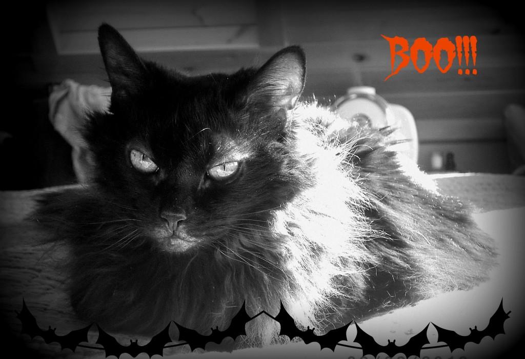 Sam Halloween
