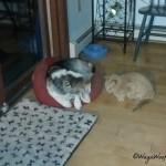 Beagle vs. Cat – Who Won?