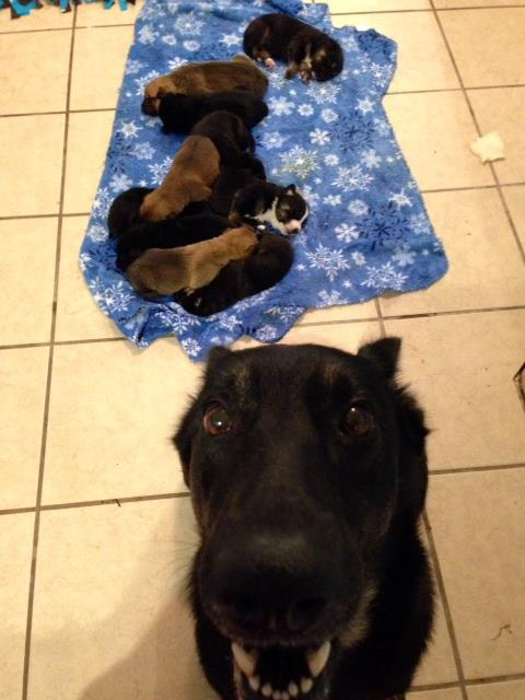 Mama Luna with her pups.
