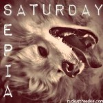 Sepia Saturday – Let Sleeping Beagles Lie