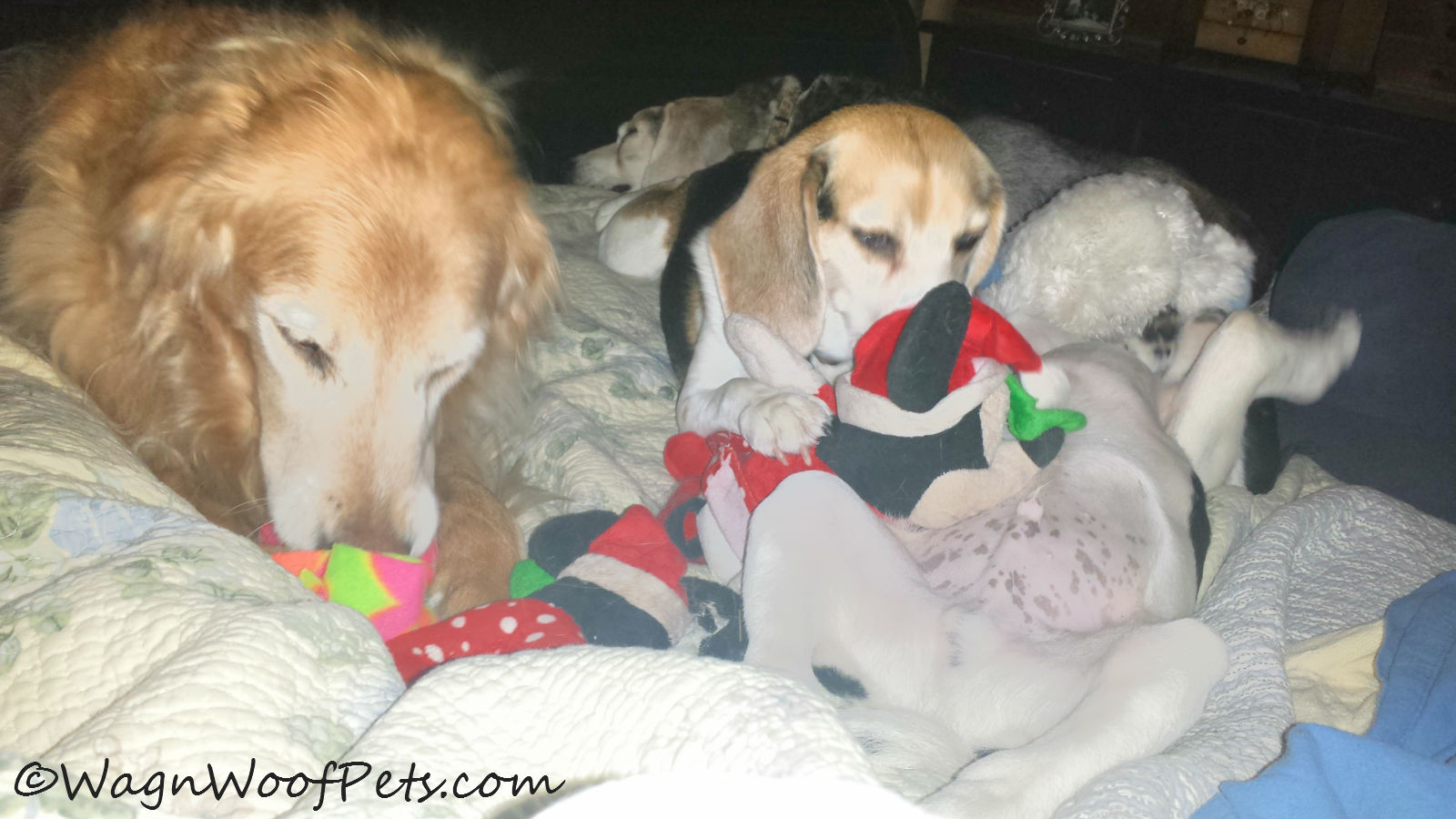 Weekend mornings are playtime on the bed.  Luke likes to let it all hang out when he's playing!