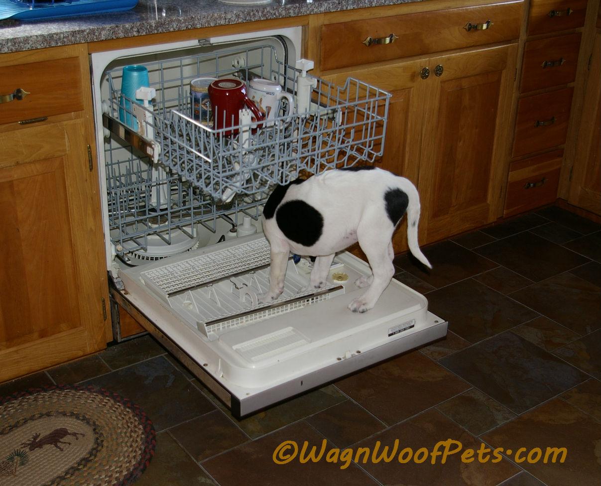 Luke dishwasher