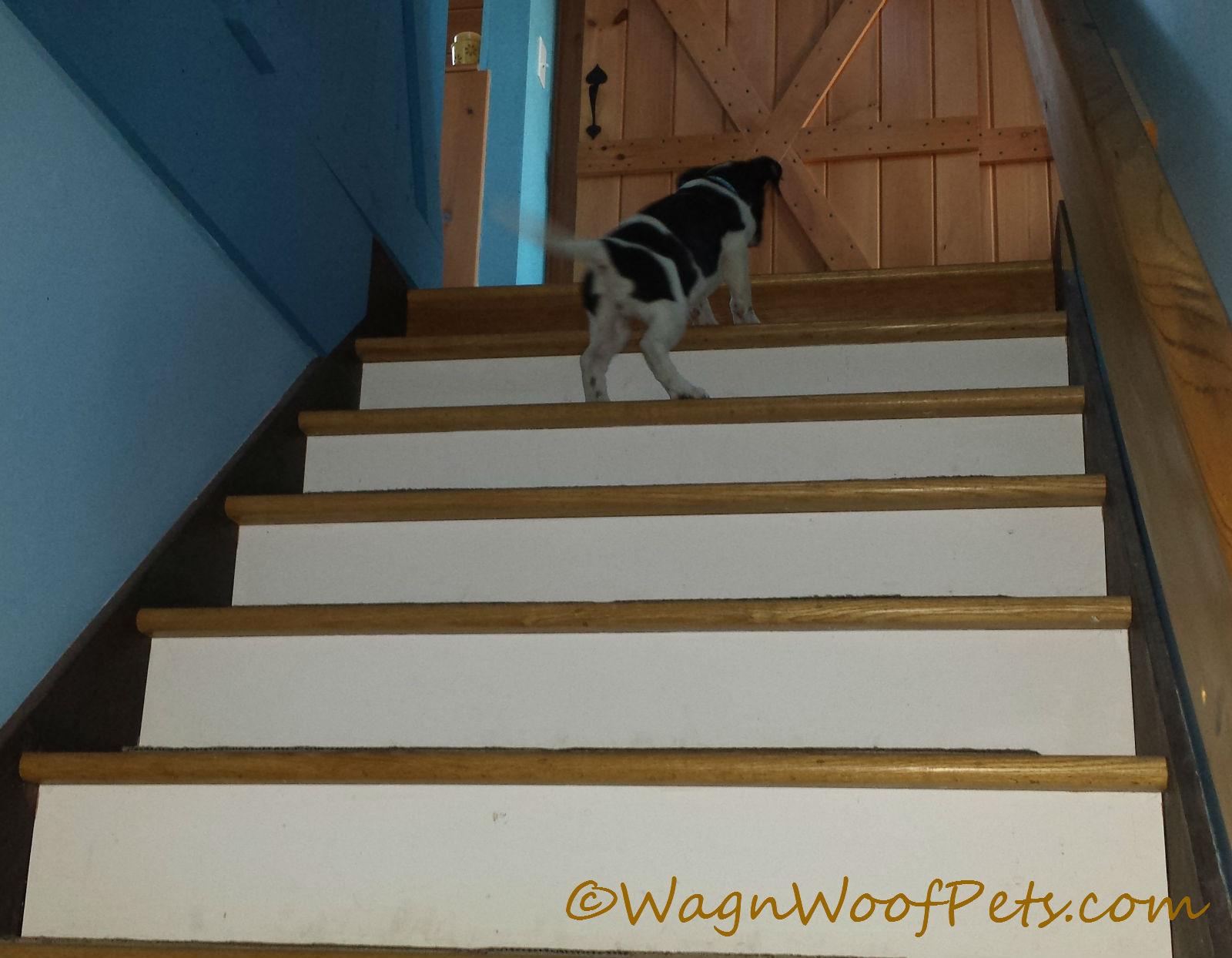 Luke stairs