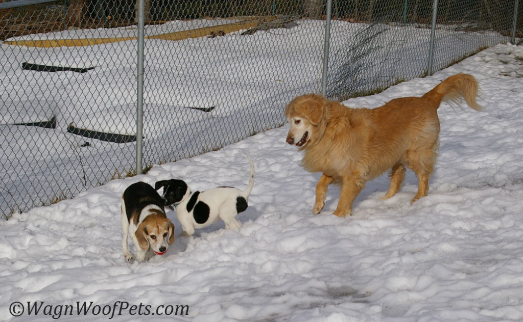 Luke playing outdoors with his new sisters.
