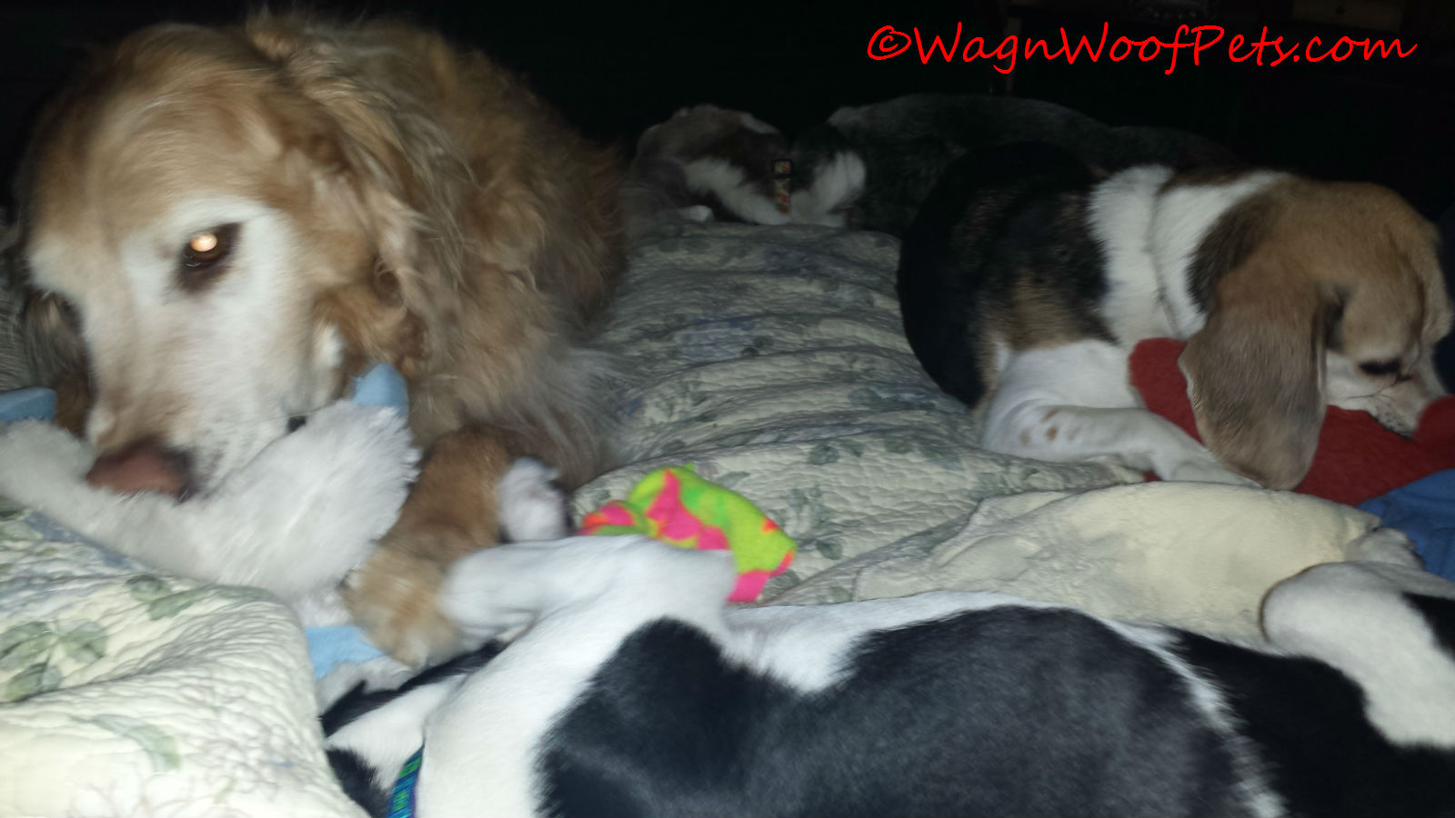 Did you notice Kobi sleeping in the background of both of the photos?