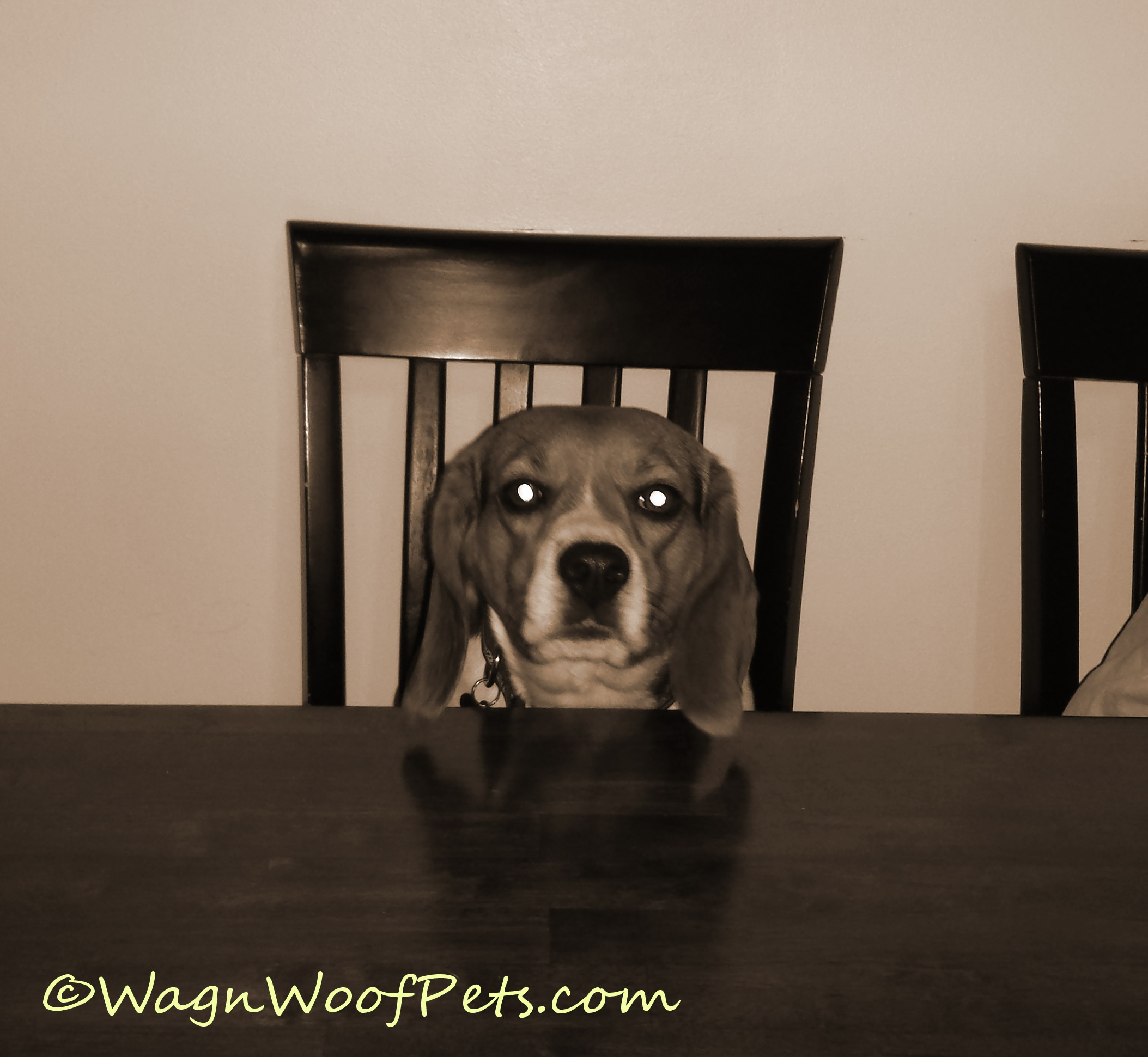 What?  Don't your dogs sit at the table like a person?