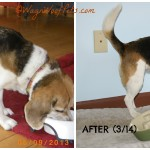 FitDog Friday – An Unexpected Surprise
