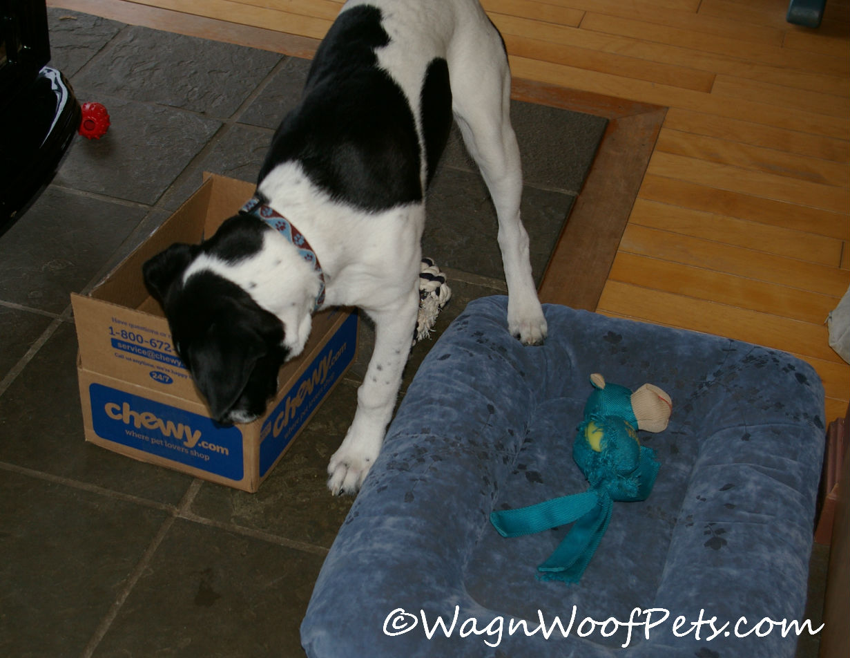 Momz took the bag away to share with us, but Luke was happy enough to just chew on the box!