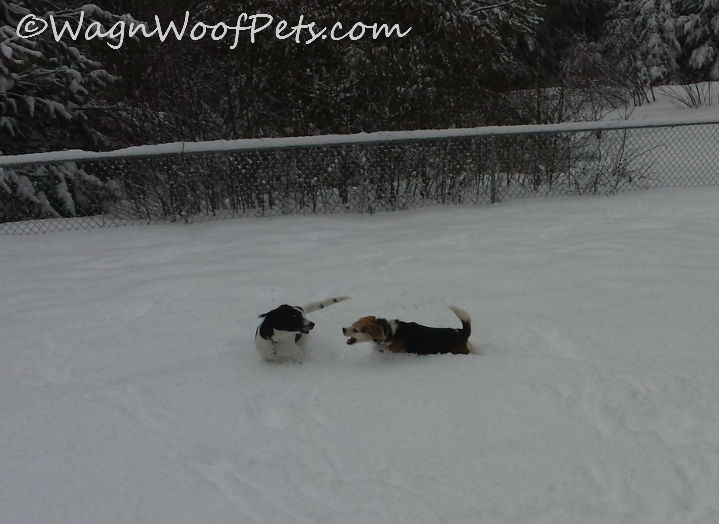 Playing in the fresh spring snow.