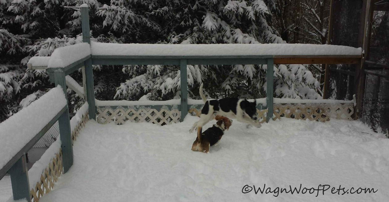 The deck is once again covered in snow, but they don't mind, it's just another play zone!