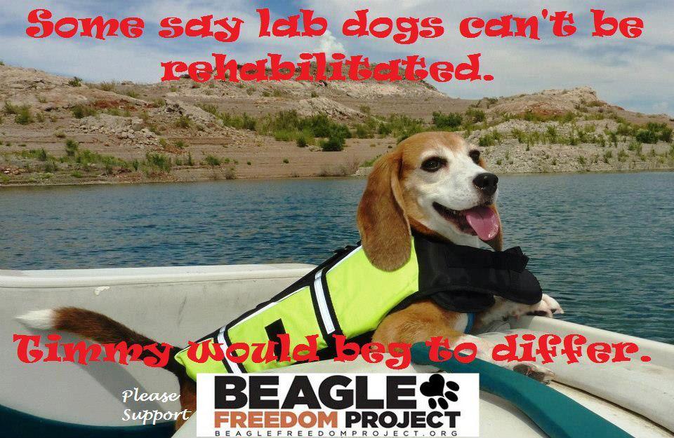 Photo courtesy of Beagle Freedom Project.