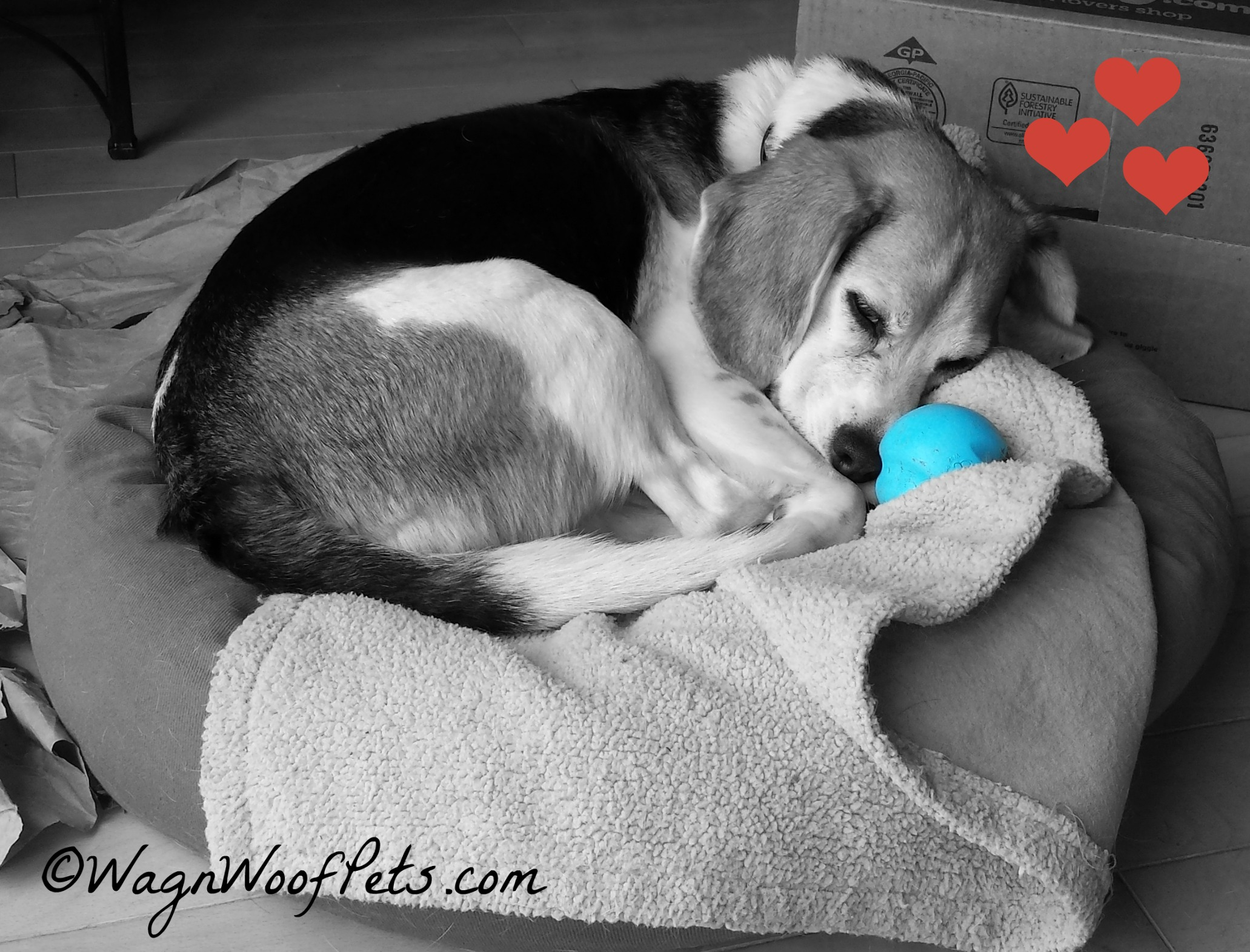 What?  Don't bother me, Mom, I'm snuggling with my ball!