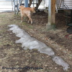 Wordless Wednesday – Pool Time?  Not Yet