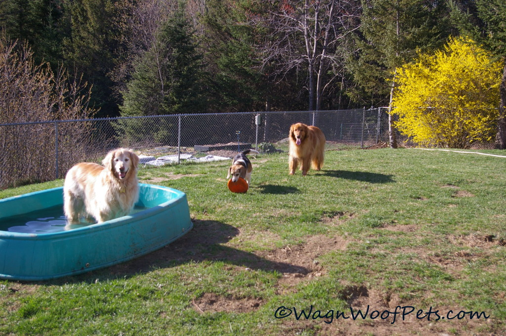The garden is right outside of the dog pen now.