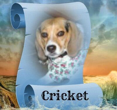 Cricket from Jenna