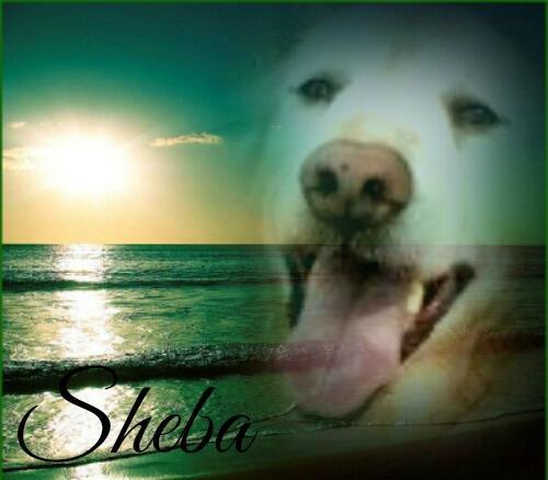 Sheba edit from Jenna