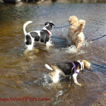 FitDog Friday – First Swims