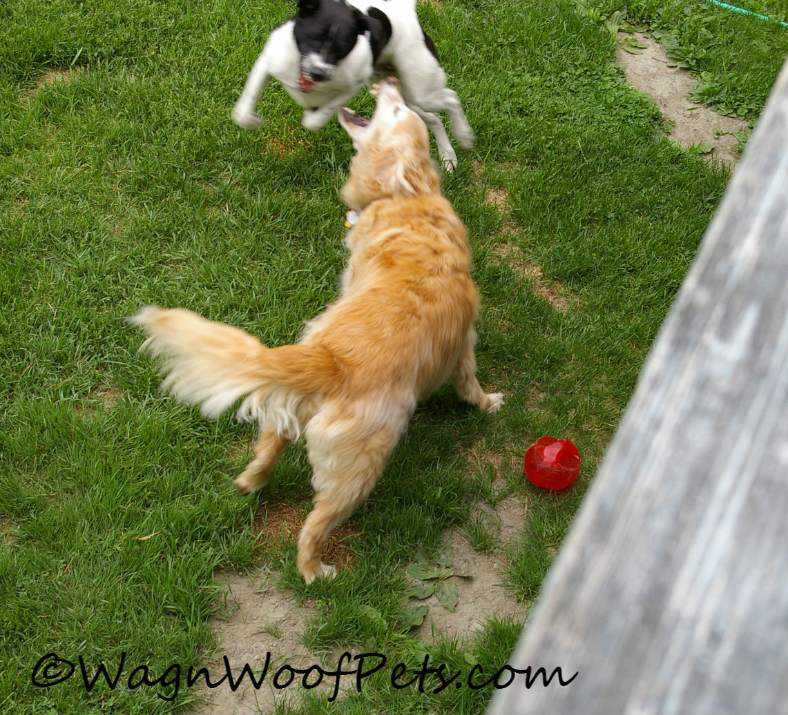 Fighting over it (all in fun)!