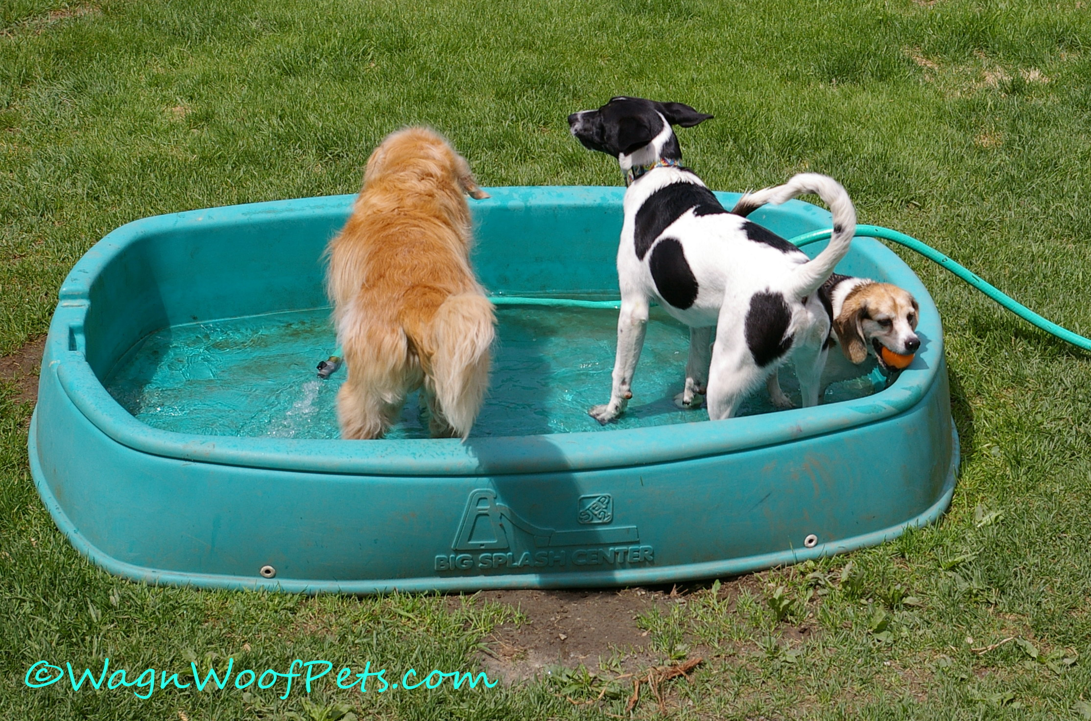 ....but the pool is always available for cooling off!